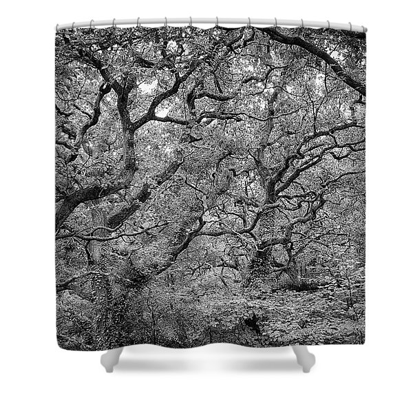 Twisted Forest Shower Curtain