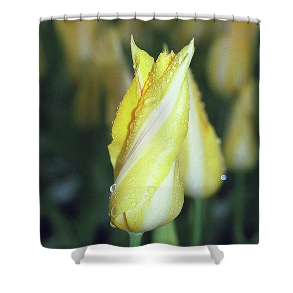 Twisted Yellow Tulip Shower Curtain