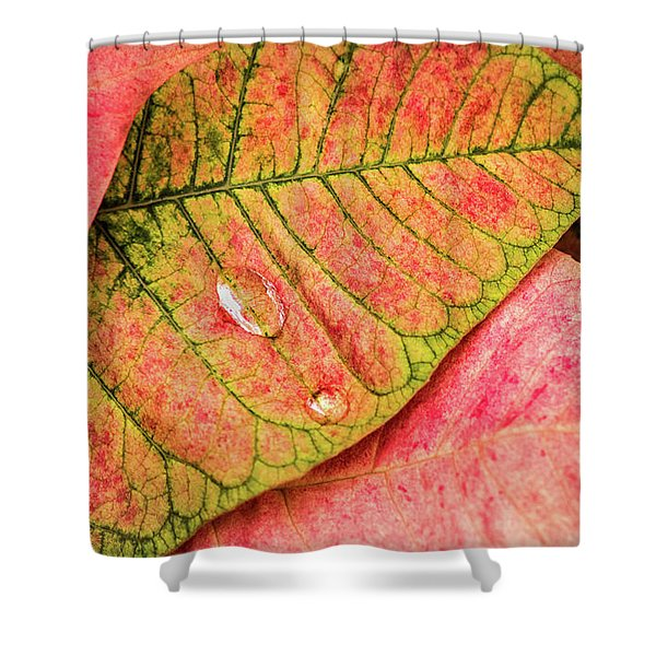 Two Drops Shower Curtain