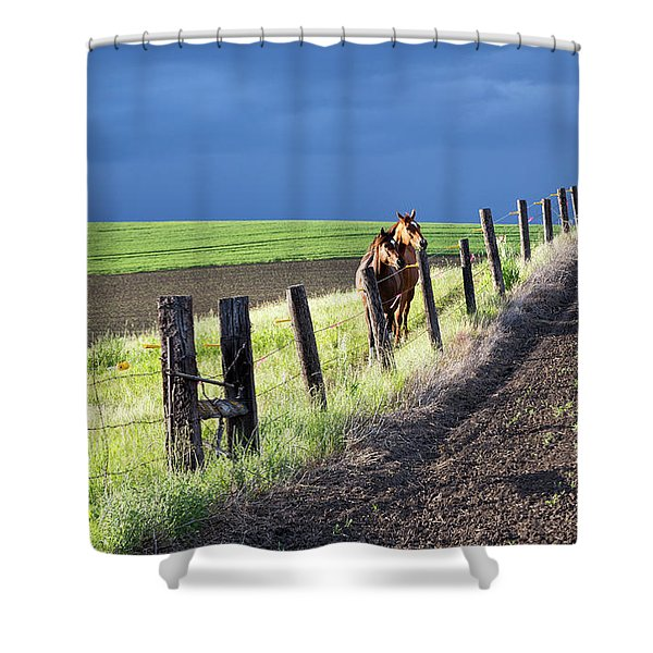 Two Horses In The Palouse Shower Curtain