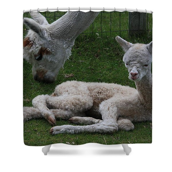Two Hours Old Shower Curtain