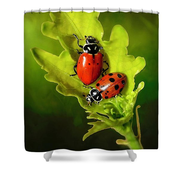 Two Ladybugs On A Leaf Shower Curtain