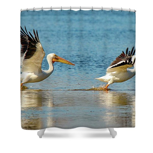 Two Pelicans Taking Off Shower Curtain