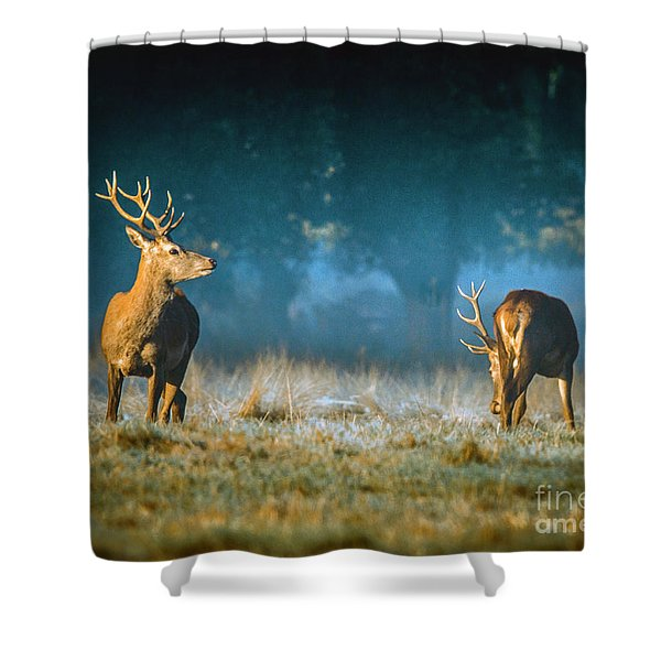 Two Stags Shower Curtain