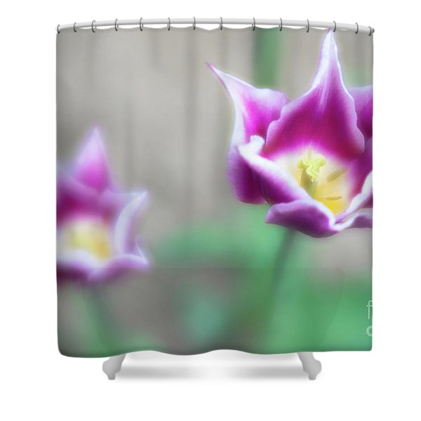 Two-tone Tulips Shower Curtain