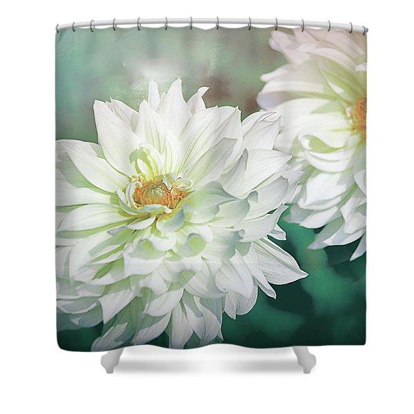 Two White Dahlias Shower Curtain