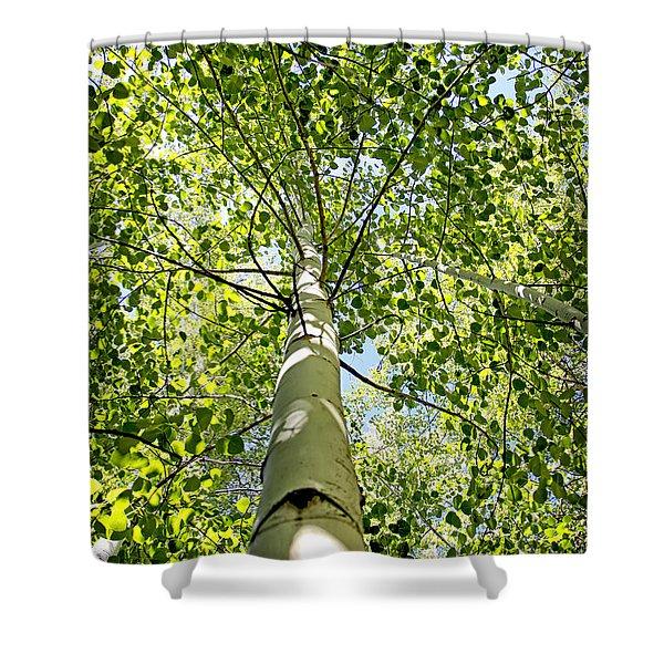 Under The Tall Aspens Shower Curtain