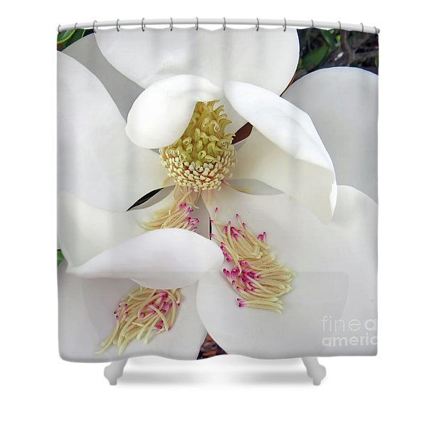 Unfolding Beauty Of Magnolia Shower Curtain