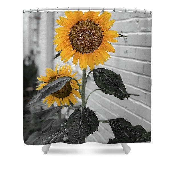 Urban Sunflower - Black And White Shower Curtain