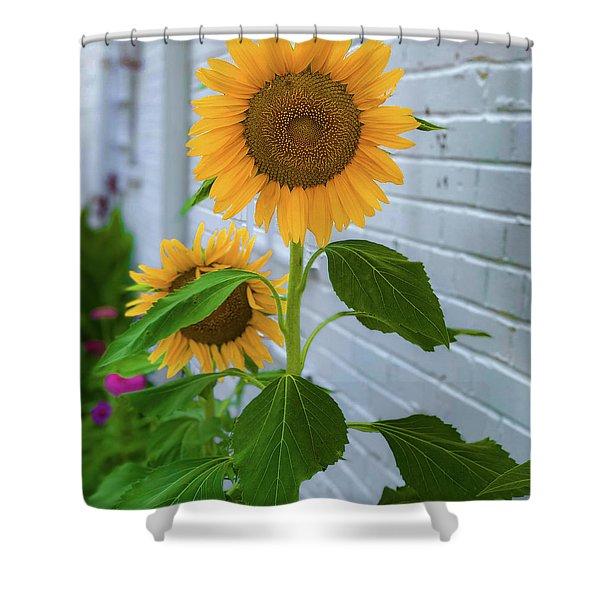 Urban Sunflower Shower Curtain