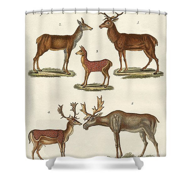 Various Kinds Of Deer Shower Curtain