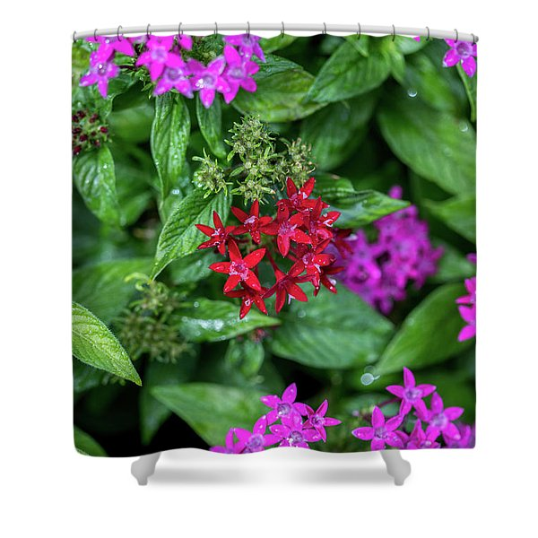 Vibrant Petals Shower Curtain