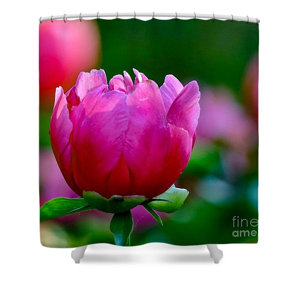 Vibrant Pink Peony Shower Curtain