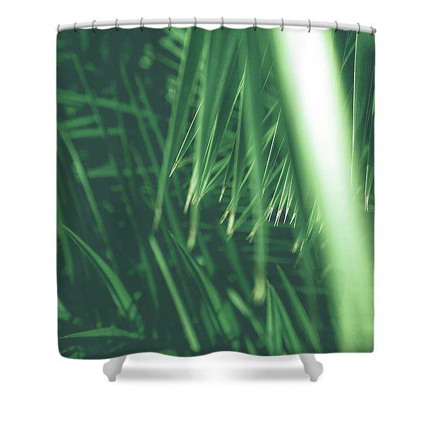 Vintage Palms Iv Shower Curtain