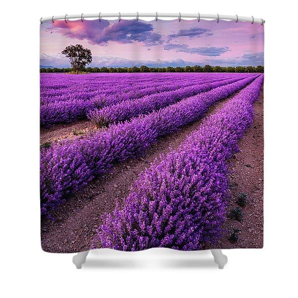 Violet Dreams Shower Curtain