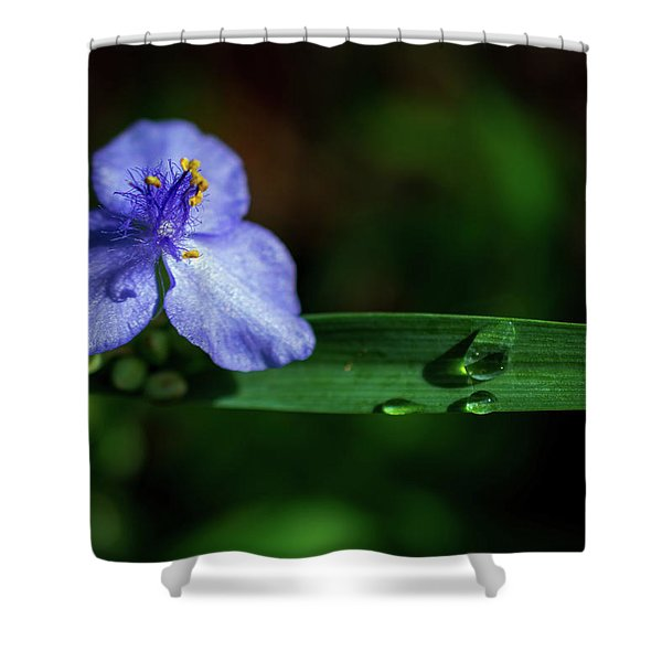 Violet With Dew Drops Shower Curtain