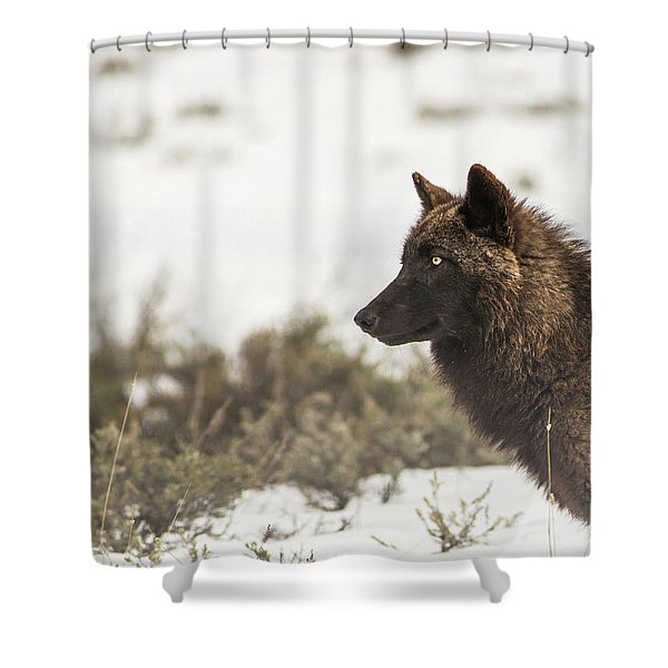 Shower Curtain featuring the photograph W11 by Joshua Able's Wildlife