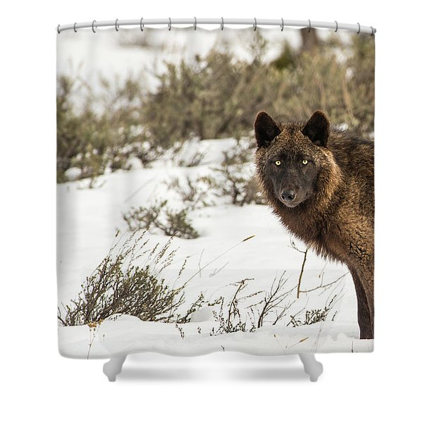 Shower Curtain featuring the photograph W12 by Joshua Able's Wildlife