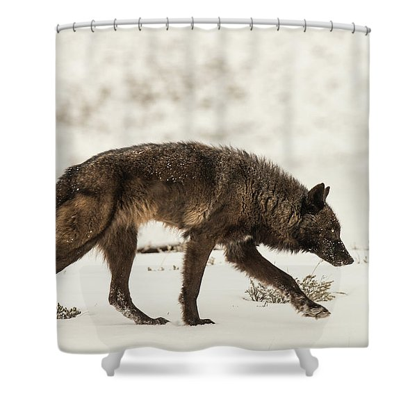Shower Curtain featuring the photograph W13 by Joshua Able's Wildlife