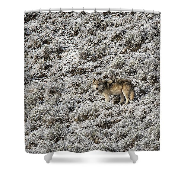 Shower Curtain featuring the photograph W17 by Joshua Able's Wildlife