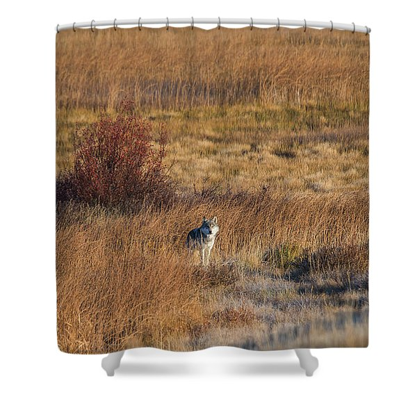 Shower Curtain featuring the photograph W2 by Joshua Able's Wildlife