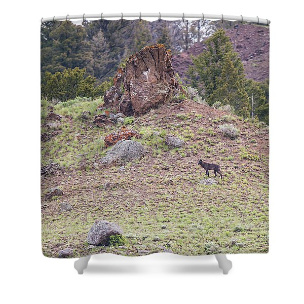 Shower Curtain featuring the photograph W21 by Joshua Able's Wildlife