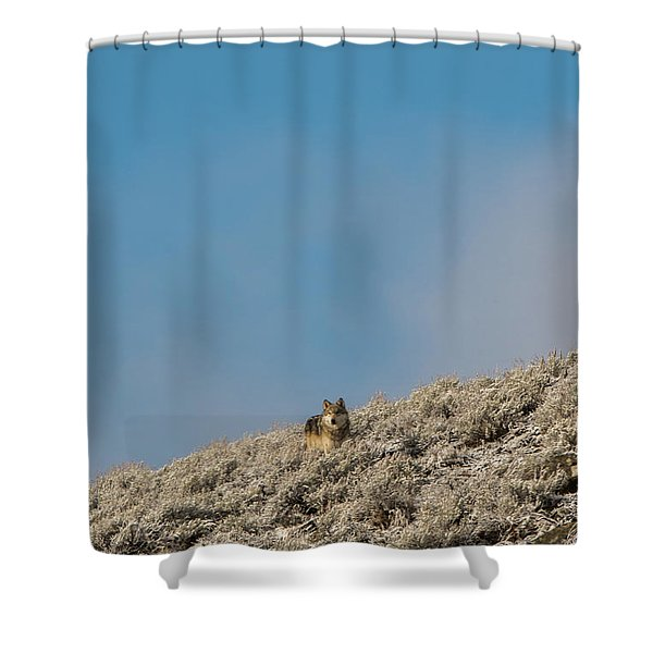 Shower Curtain featuring the photograph W24 by Joshua Able's Wildlife