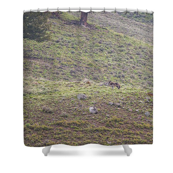 Shower Curtain featuring the photograph W25 by Joshua Able's Wildlife