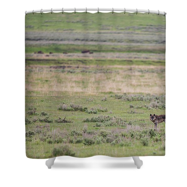 Shower Curtain featuring the photograph W26 by Joshua Able's Wildlife