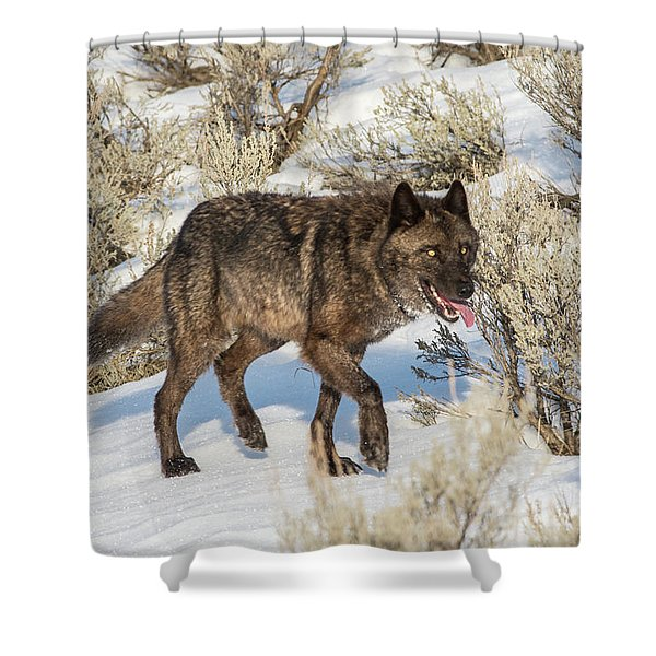 Shower Curtain featuring the photograph W28 by Joshua Able's Wildlife