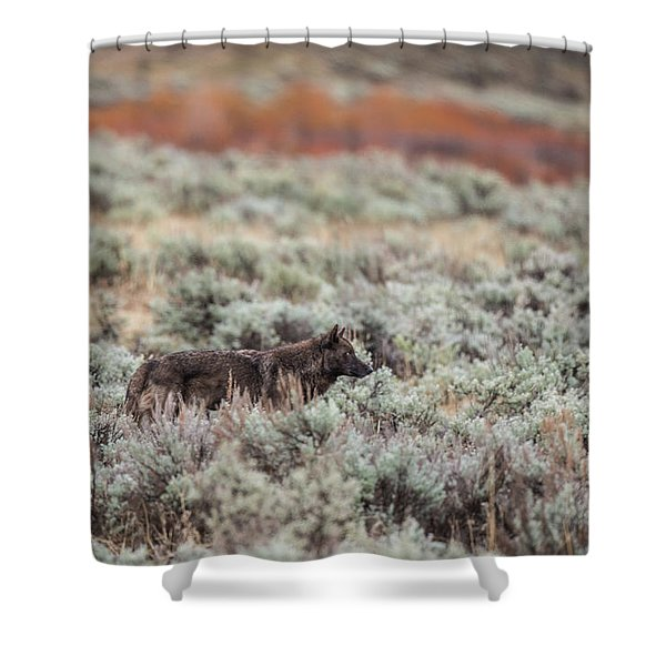 Shower Curtain featuring the photograph W30 by Joshua Able's Wildlife