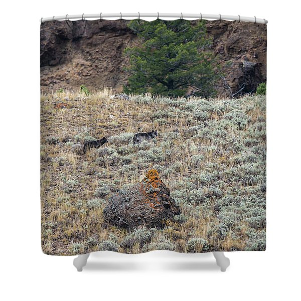 Shower Curtain featuring the photograph W32 by Joshua Able's Wildlife