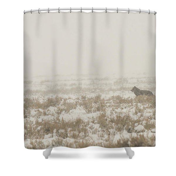 Shower Curtain featuring the photograph W34 by Joshua Able's Wildlife
