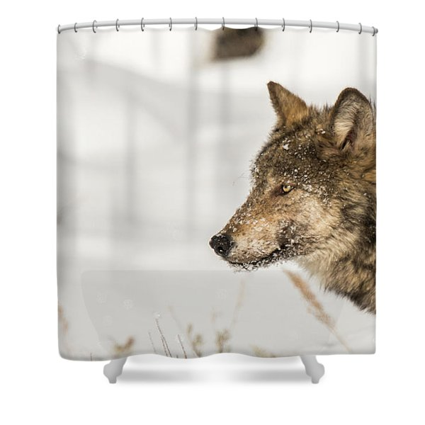 Shower Curtain featuring the photograph W37 by Joshua Able's Wildlife