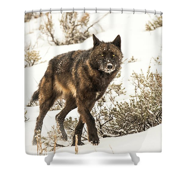 Shower Curtain featuring the photograph W38 by Joshua Able's Wildlife
