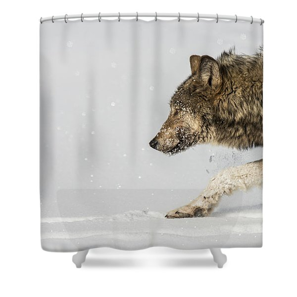 Shower Curtain featuring the photograph W40 by Joshua Able's Wildlife