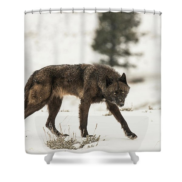 Shower Curtain featuring the photograph W42 by Joshua Able's Wildlife