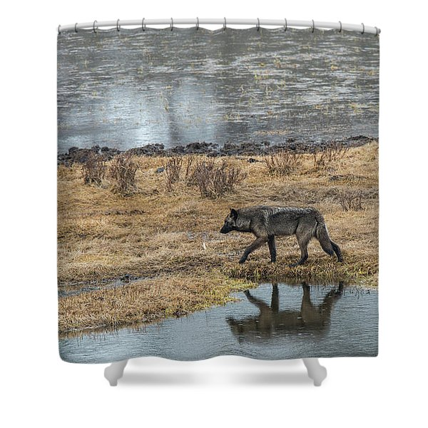 Shower Curtain featuring the photograph W53 by Joshua Able's Wildlife