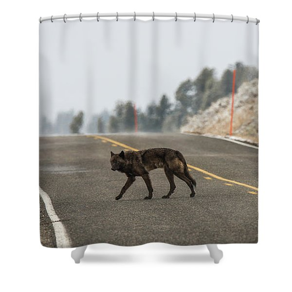 Shower Curtain featuring the photograph W55 by Joshua Able's Wildlife