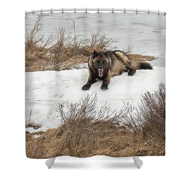Shower Curtain featuring the photograph W57 by Joshua Able's Wildlife