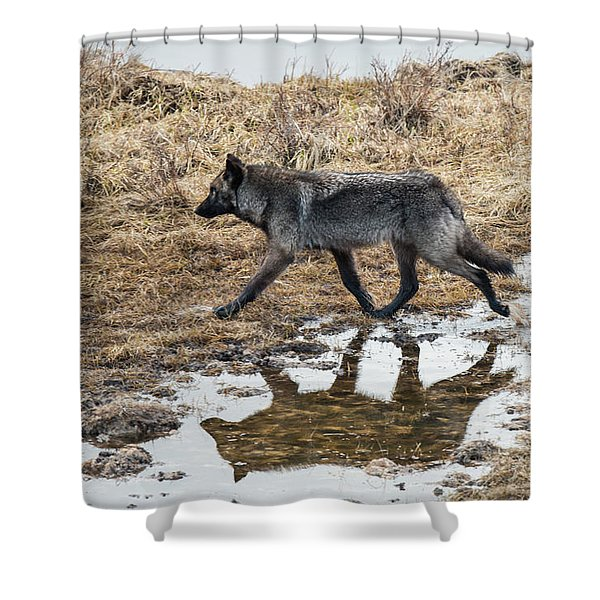 Shower Curtain featuring the photograph W60 by Joshua Able's Wildlife
