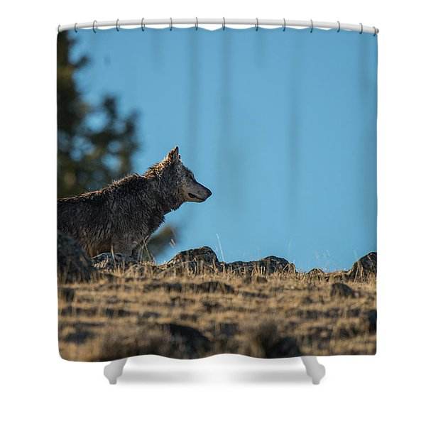 Shower Curtain featuring the photograph W61 by Joshua Able's Wildlife