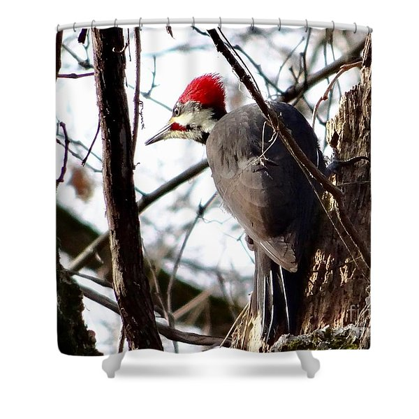 Warypileated Shower Curtain