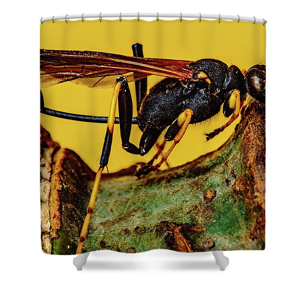 Wasp Just Had Enough Shower Curtain