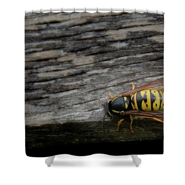 Shower Curtain featuring the photograph Wasp On Wood by Scott Lyons