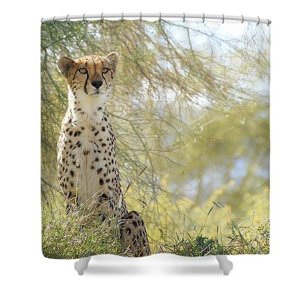 Watchful Eyes Shower Curtain