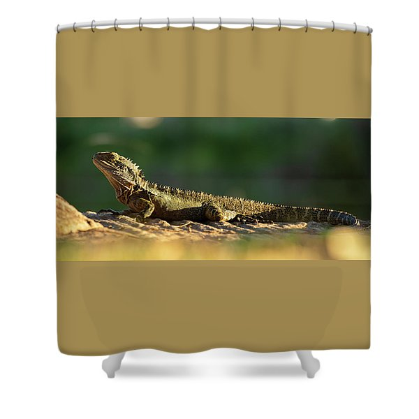 Shower Curtain featuring the photograph Water Dragon Lizard Outdoors by Rob D Imagery