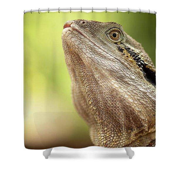 Water Dragon. Shower Curtain