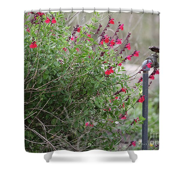 Shower Curtain featuring the photograph Water In The Garden by Charles McKelroy