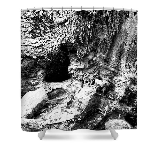 Weathered Stump Shower Curtain